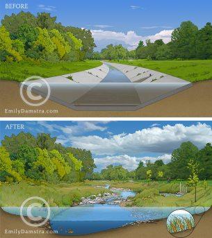 Stream restoration illustration – Emily S. Damstra