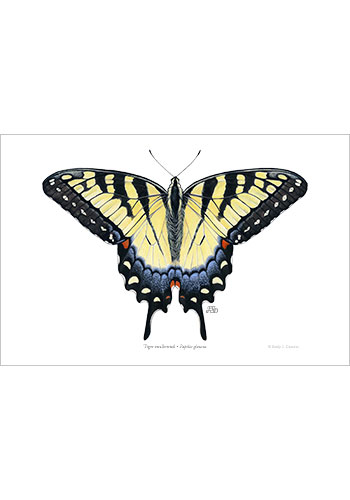 tiger_swallowtail_print