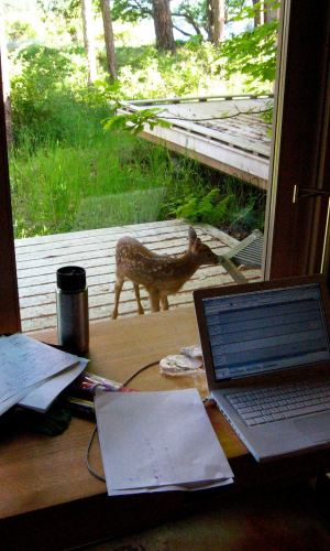 A deer on the porch, Whitely Center, Friday Harbor Labs, WA