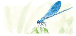 april : damselfly