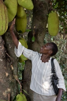 Beatrice selecting a ripe jackfruit.