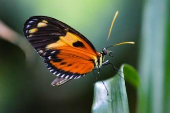 butterflyedit