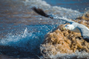 July 14-The gull took off right as the wave crashed.