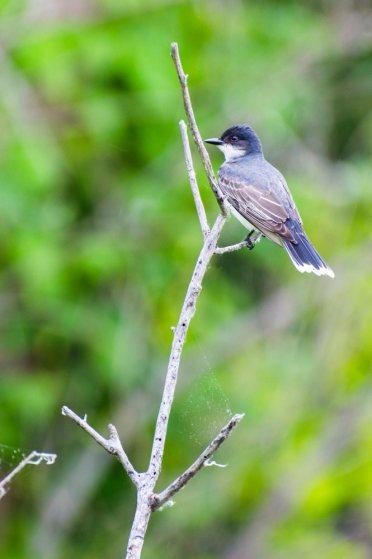 may27-smallbird