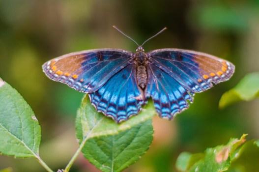 oct14-butterfly
