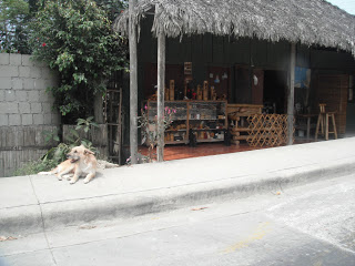 Dog on sidewalk in front of store