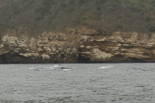 Whales swimming with calf