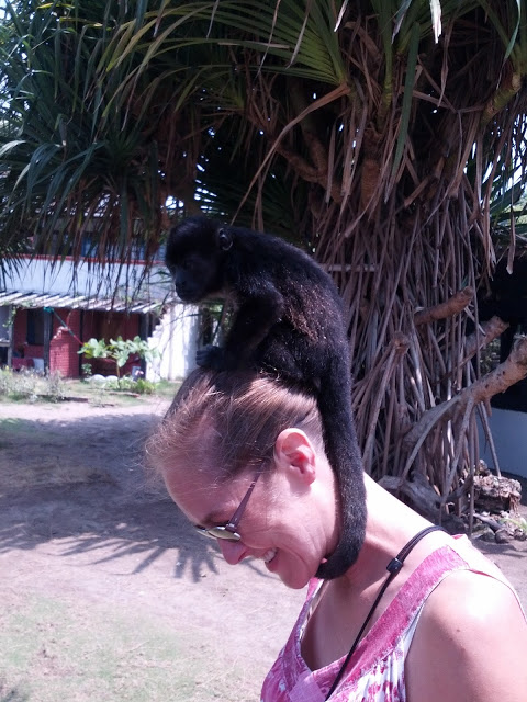 Monkey on Emily's head
