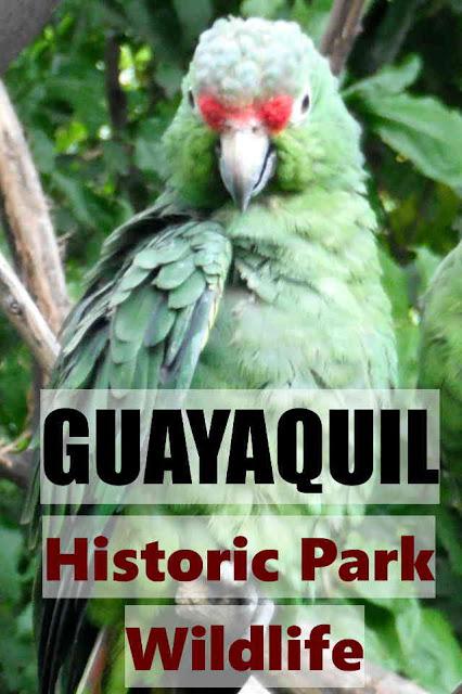 Guayaquil Historic Park Wildlife Pinterest
