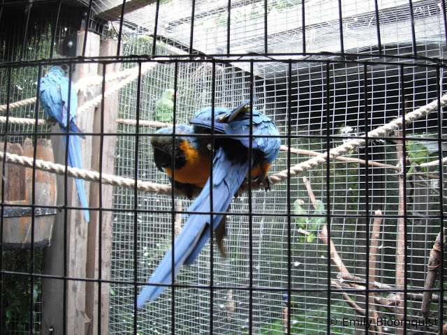 Rehabbing parrots in cages