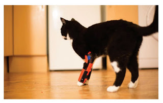 Cat with prosthetic leg