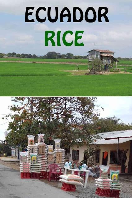 Ecuador Rice Pinterest photo