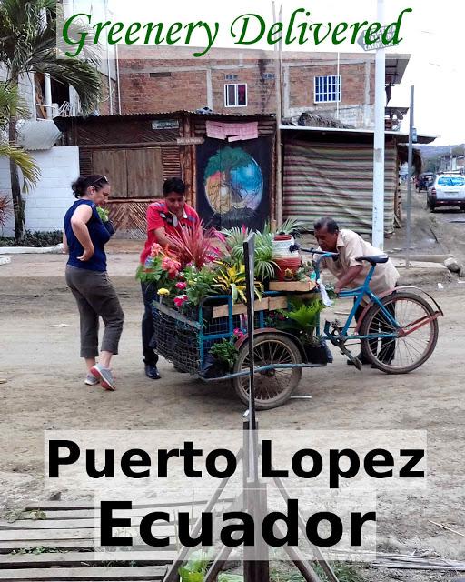 Greenery delivered in Puerto Lopez, Ecuador