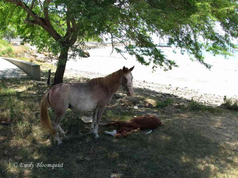Horses under a shade tree