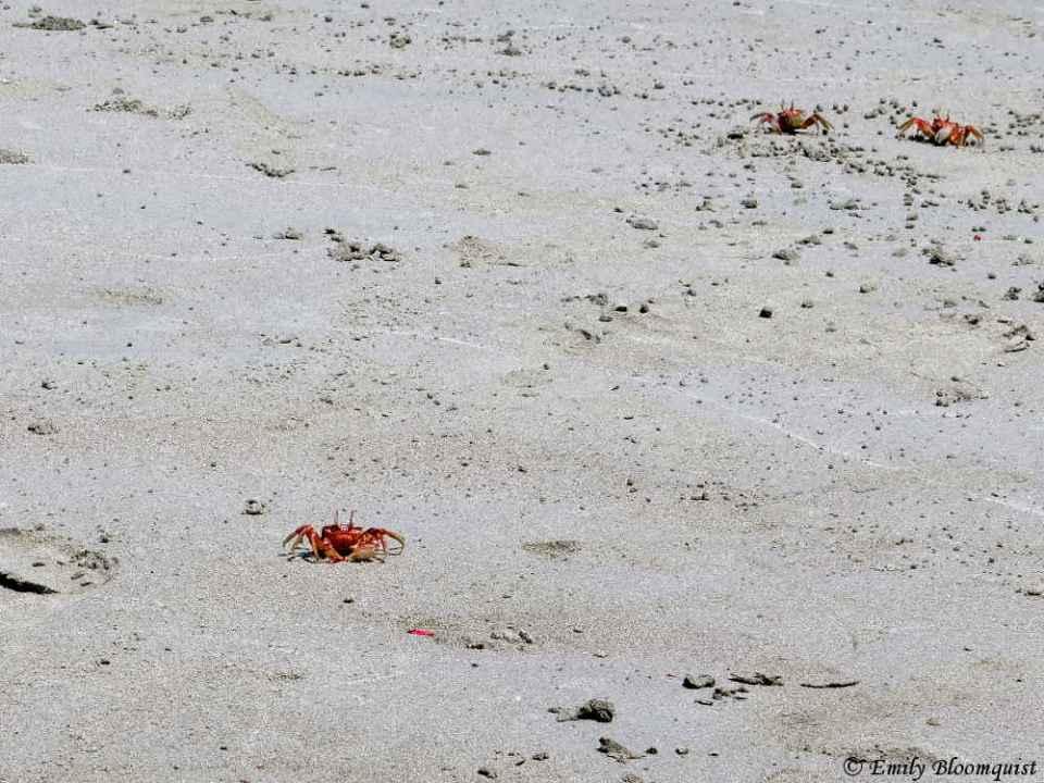 Crab watching Emily