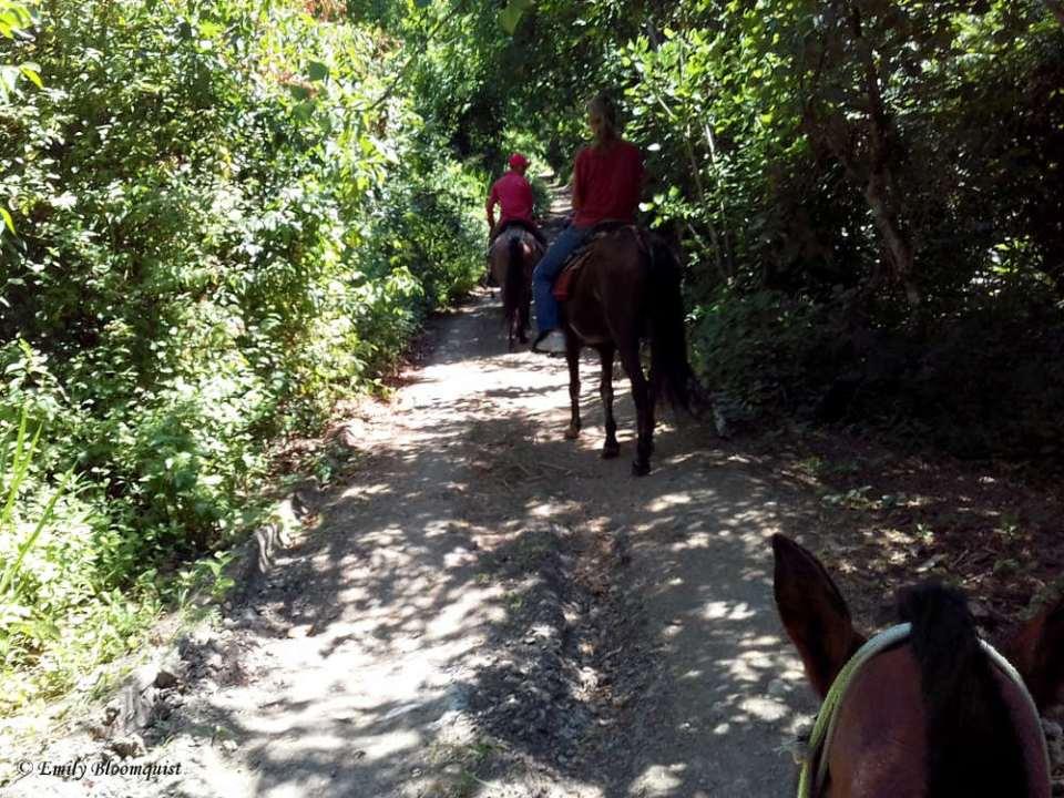Horseback riding La Curia Trail