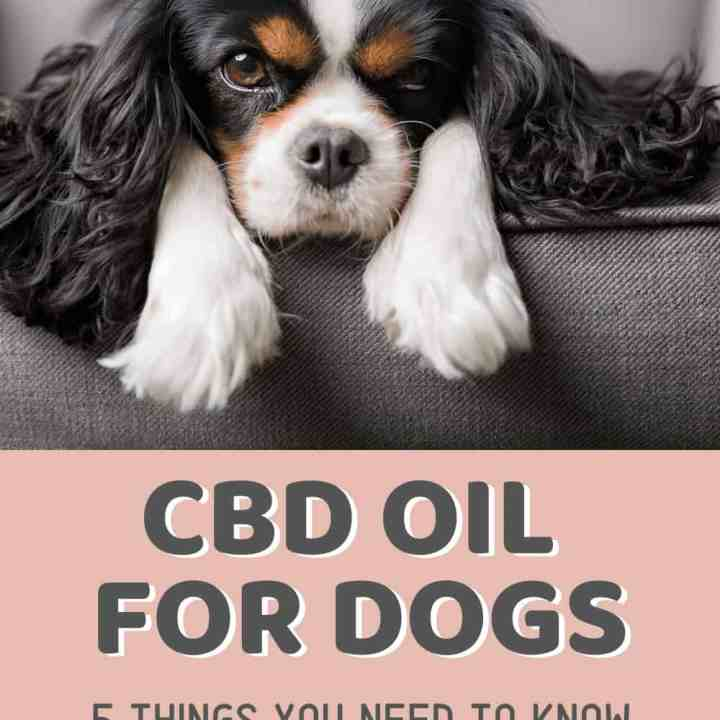 CBD Oil for Dogs - Welcome to the Cannabis Blog For Moms