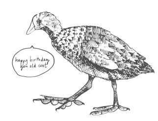 bird-09