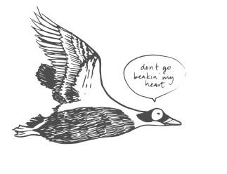 bird-11