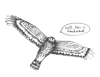 bird-13