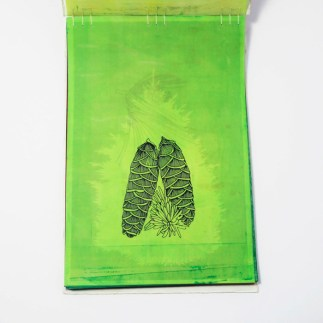 Fifty Trees artist book by Emily Longbrake 04