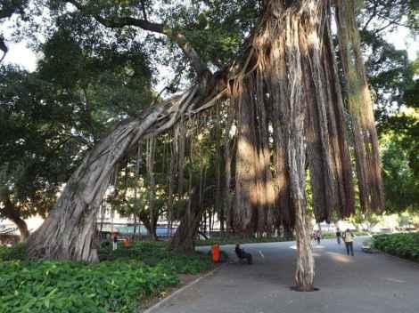 Parque Campos de Santana