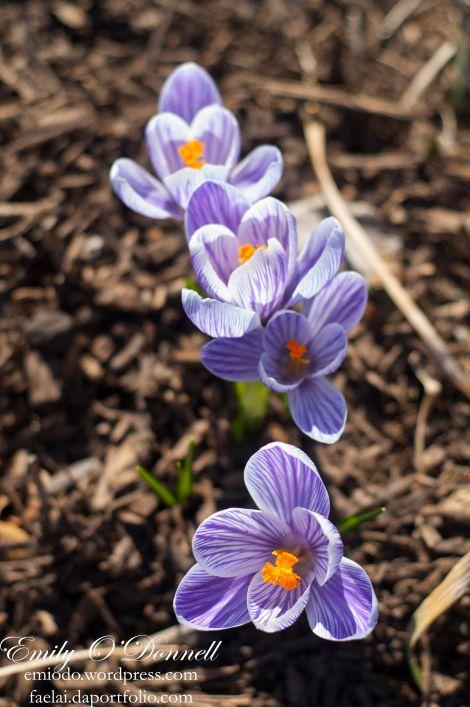 Spring06_wm