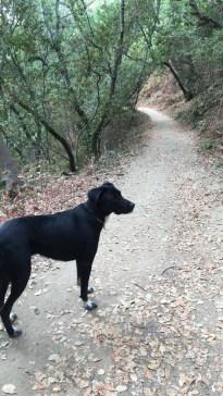 2016-09-10-olive-hike