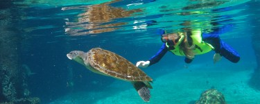 At Cayman Turtle Center, families can snorkel with sea turtles