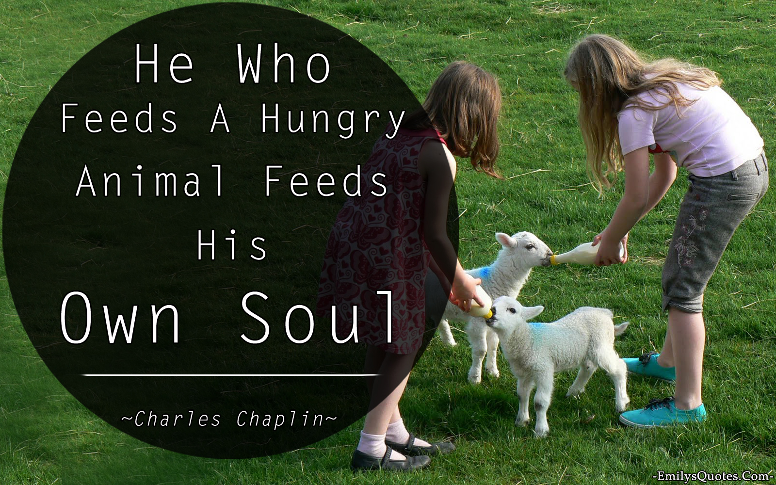 He Who Feeds A Hungry Animal Feeds His Own Soul