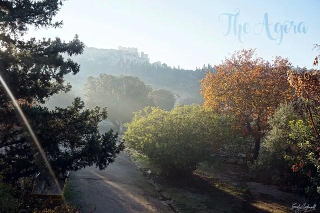 the-agora-trees