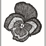 Pansy flower as a hand drawing in black and white drawn by artist Emily Walker with pristine detail and lines on the petals