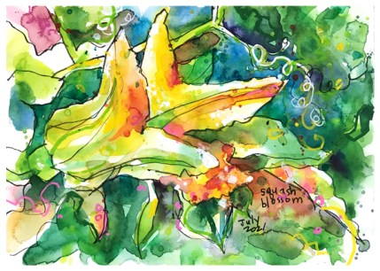 watercolor painting of squash blossom by emily weil