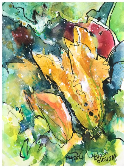watercolor and ink drawing of squash blossom by emily weil
