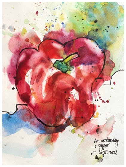 watercolor and ink drawing of red pepper by emily weil