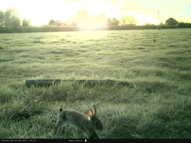 http://www.naturespy.org/species-spied/rabbits-camera-trap/