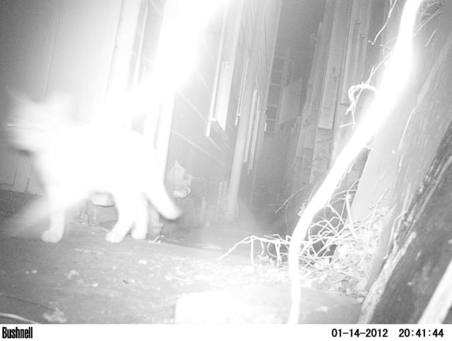 Cat looking like it's getting hit by lightning. Infrared and close range make the vines in the foreground white hot.