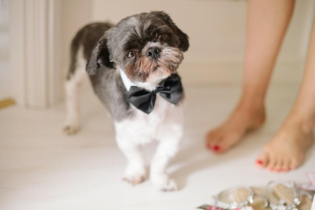 pencoed-house-cardiff-wedding-photography-012