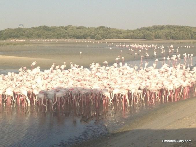 ras-al-khor-wildlife-santuary-pictures-06