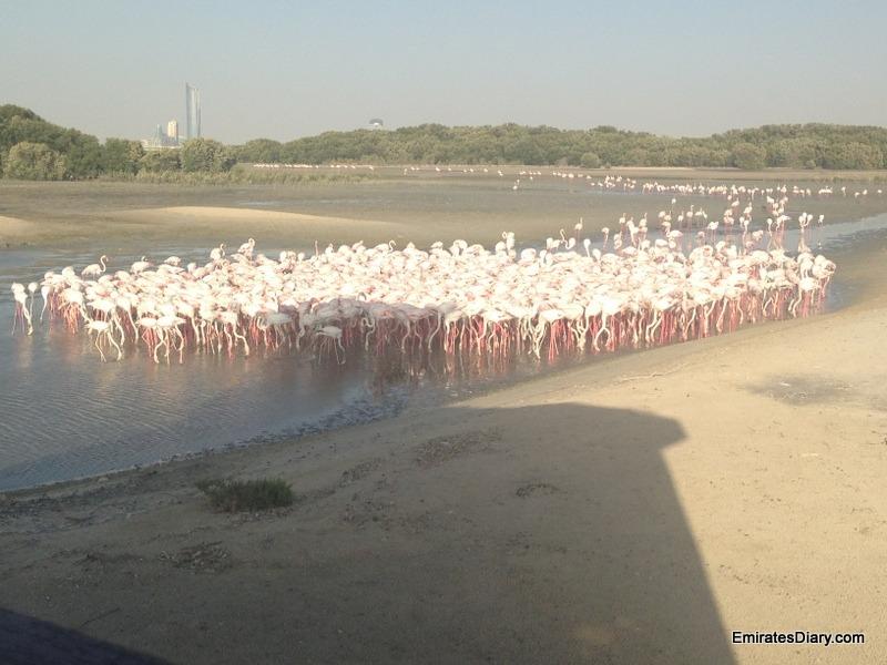 ras-al-khor-wildlife-santuary-pictures-15
