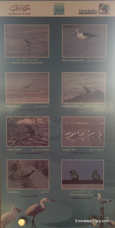 ras-al-khor-wildlife-santuary-pictures-23