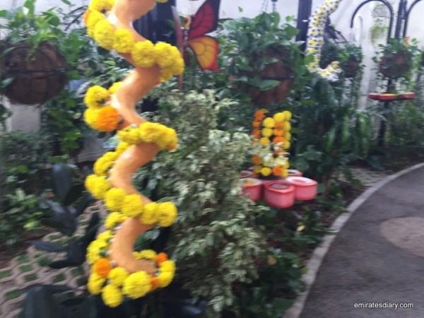 12-butterfly-garden-dubai-pictures-2015-emiratesdiary-012