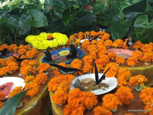 19-butterfly-garden-dubai-pictures-2015-emiratesdiary-019