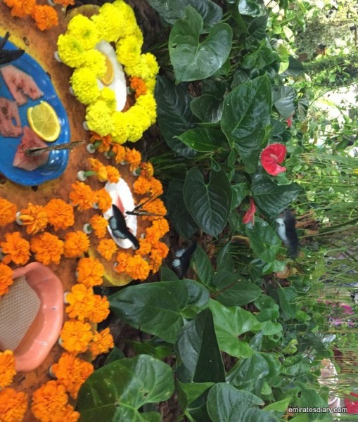 20-butterfly-garden-dubai-pictures-2015-emiratesdiary-020