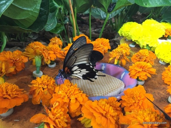 23-butterfly-garden-dubai-pictures-2015-emiratesdiary-023