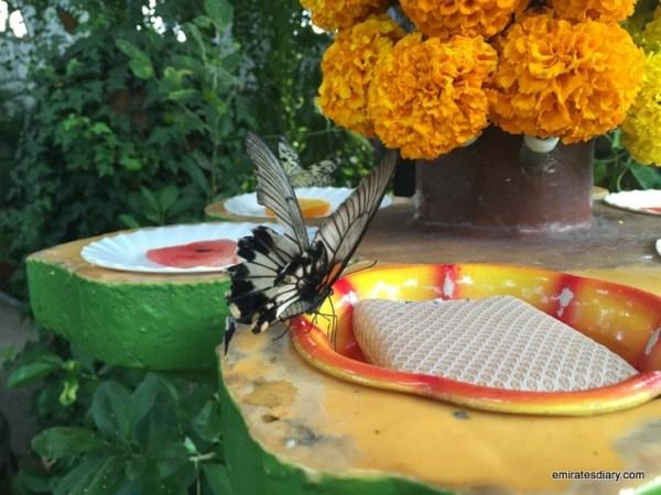 26-butterfly-garden-dubai-pictures-2015-emiratesdiary-026