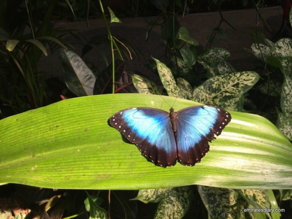 29-butterfly-garden-dubai-pictures-2015-emiratesdiary-029