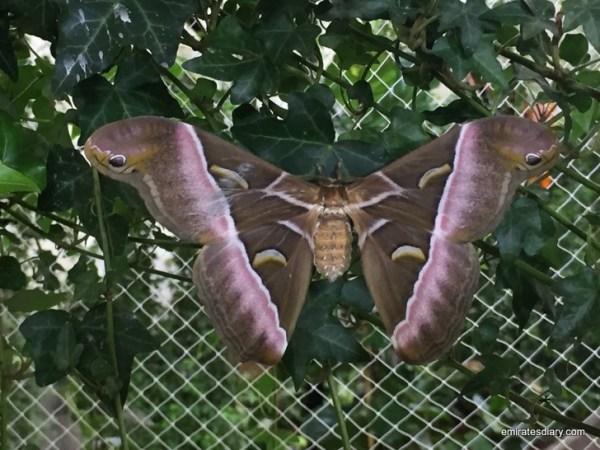 36-butterfly-garden-dubai-pictures-2015-emiratesdiary-036