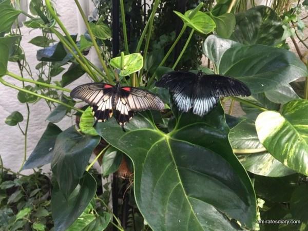 56-butterfly-garden-dubai-pictures-2015-emiratesdiary-056