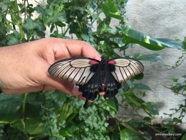 59-butterfly-garden-dubai-pictures-2015-emiratesdiary-059